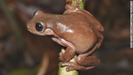 La creatura era così chiamata a causa della colorazione del cioccolato.